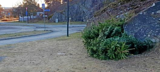 Innsamling av juletrær og miljø