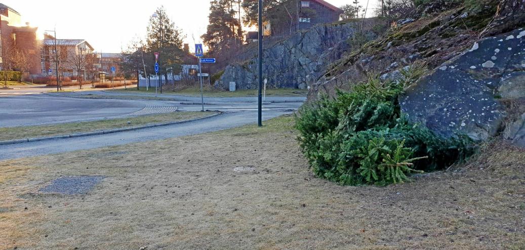 HENTEPUNKT: Tidligere var det flere hentepunkt for juletrær i gamle Oppegård kommune, som her i rundkjøringen ved Kapellveien/Kolbotnveien.