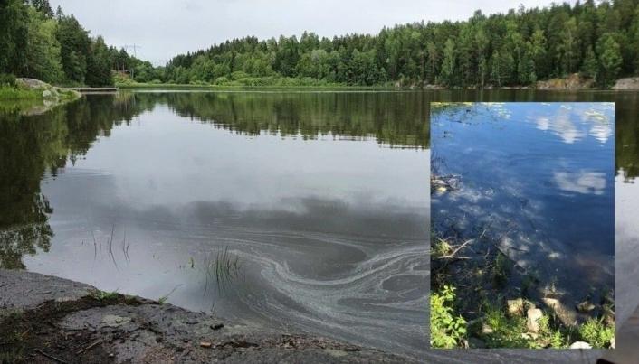 OLJELEKKASJE: Oljeutslippet på cirka 350 liter hydraulikkolje til Tussetjern var oppdaget 3. juli i fjor sommer. INNFELT BILDE: Bildet fra slutten av juli viser en tyngre oljefilm som legger seg i viken. Yana Stubberudlien/ Innfelt foto: Miljøvakta AS