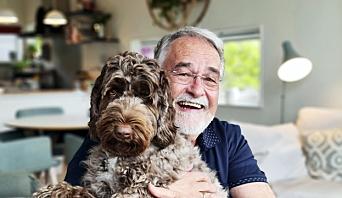 HJERTEVENN: Cobberdog-hunden Dindi på 1,5 år har fått navnet etter sangen med samme navn av Antônio Carlos Jobim. Hunden er nok glad for å ha matfar hjemme på heltid etter et langt arbeidsliv i kulturens tjeneste.