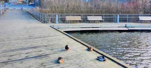 Fraråder bading i Kolbotnvannet