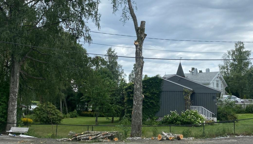 SKAL NED: Får kommunen og Solon eiendom som de vil, må dette 100 år gamle bjørketreet felles. Arbeidet startet fredag morgen, men ble stoppet da naboer reagerte.