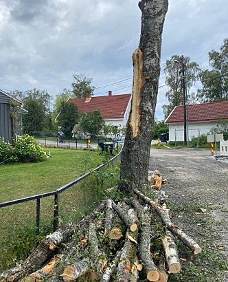 MÅ NED: Treet utenfor Theodor Hansens vei 11 ofres til fordel for veiformål. I dette tlfellet betyr det en grøft.