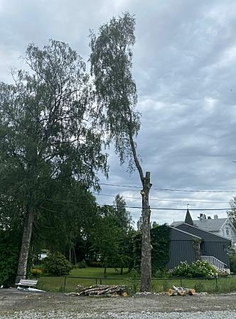 VAR GODT I GANG: Da Oppegård Avis kom til Veslebukta fredag formiddag, var arbeidene med å fjerne bjørken godt i gang.