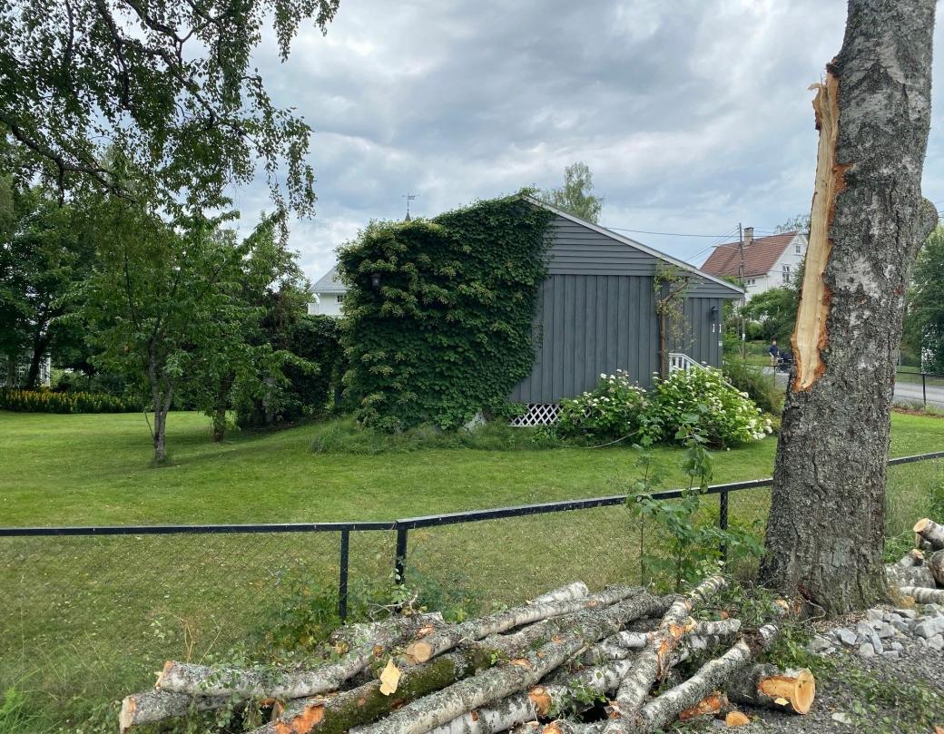 SNART HISTORIE: Det er utført nye målinger og kommunen bekrefter at treet står på kommunal grunn. Det er derfor grunn til å tro at arbeidet med å felle treet gjenopptas over helgen.