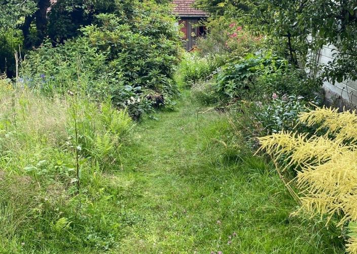 ULIKE DELER: Filberg Memo tror mange hageeiere kunne fått seg noen aha-opplevelser ved å la deler av hagen bli litt villere.