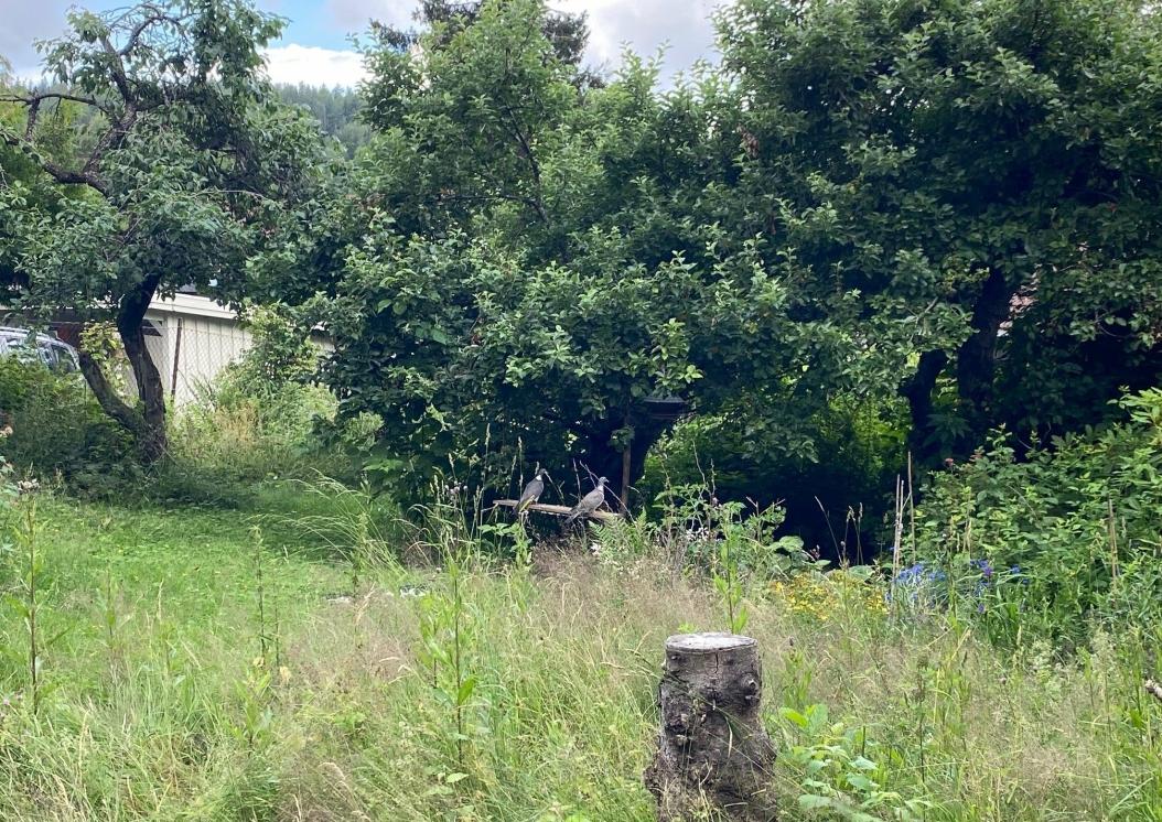 RIKT DYRELIV: I hagen på Solbråtan er det et rikt dyreliv hver eneste dag. Lydene kan nesten ikke beskrives.