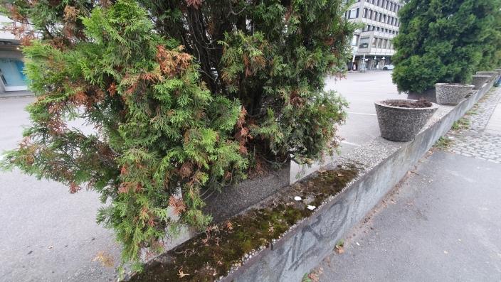 MOSE OG UGRESS: Mose og ugress får gode vekstvilkår langs Kolbotnveien.