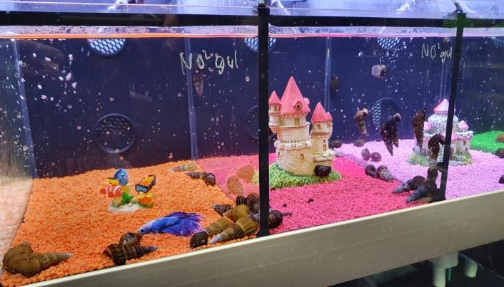 BARNEVENNLIG: Denne fargerike avdelingen med akvariefisk og søte dekorasjoner vil trolig trekke mange barn.