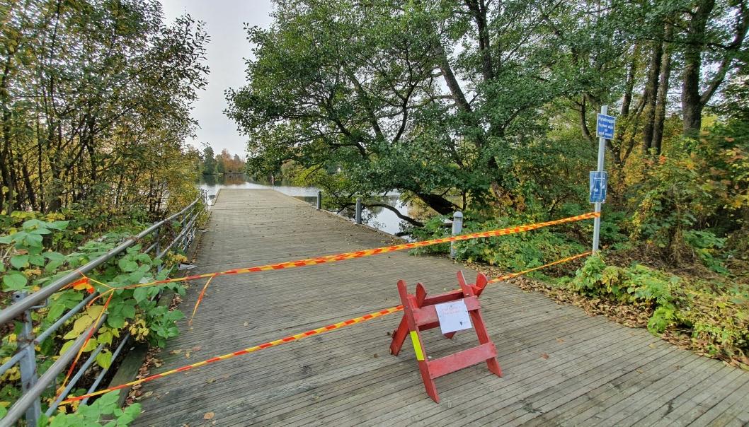 SPERRET AV: Bryggen har vært sperret av i en uke som følge av fare for trefall. I dag skal ansatte fra Vei og park fjerne delen av det store treet ved bryggen.